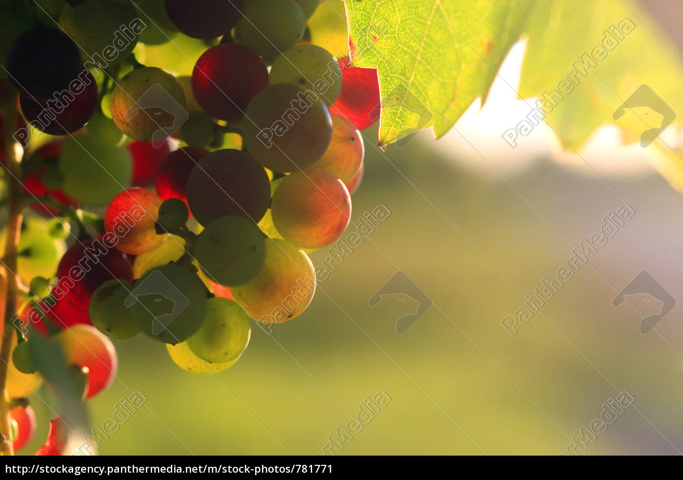colorful, grapes, wayside - 781771