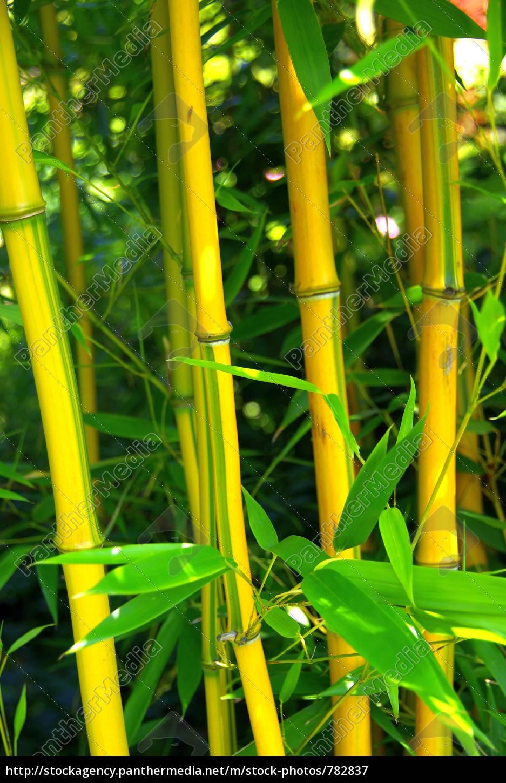 bamboo, 03 - 782837