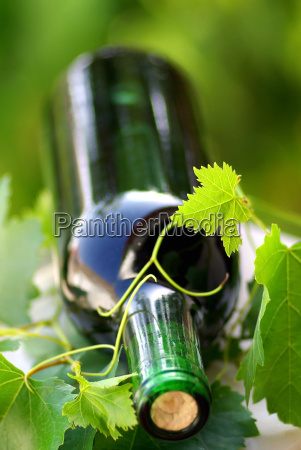 bottle, of, wine, between, grapevine, leves. - 786243