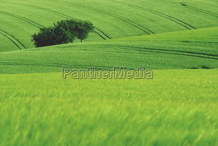 green - 791591