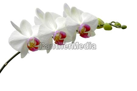 white, beauty - 792807
