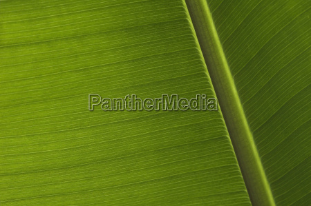 green, palm, leaf - 795157