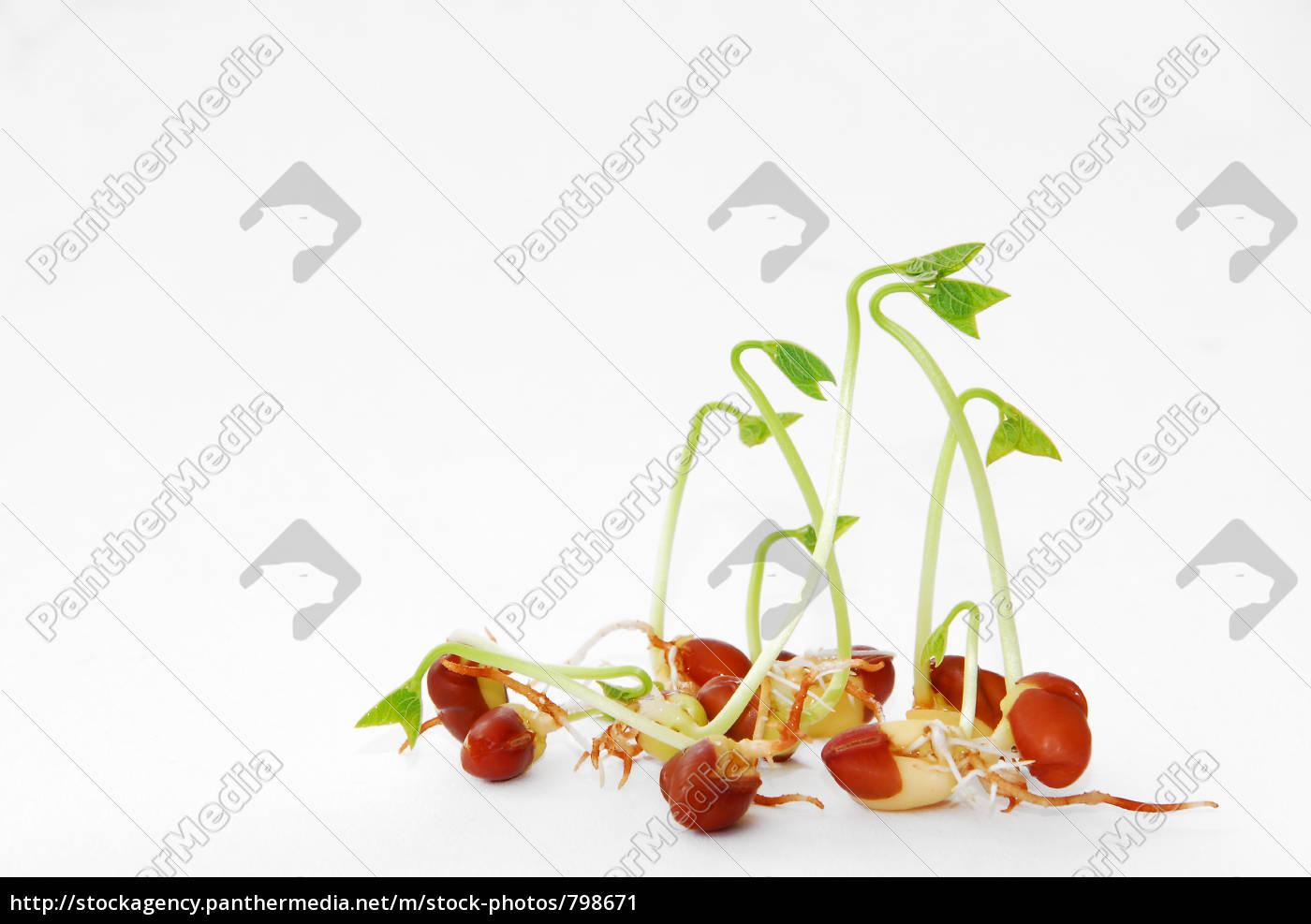 seedlings, 3 - 798671