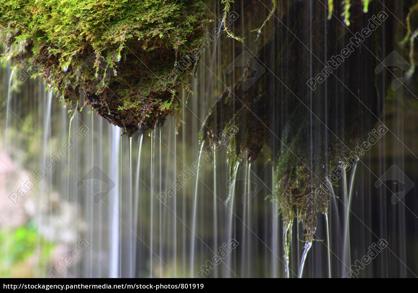 water, and, moss, 2 - 801919