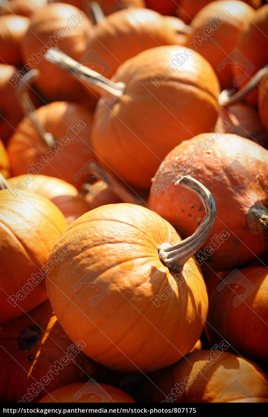 pumpkin, time - 807175