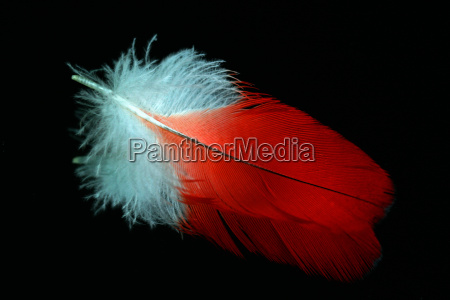 reflection of a parrot feather