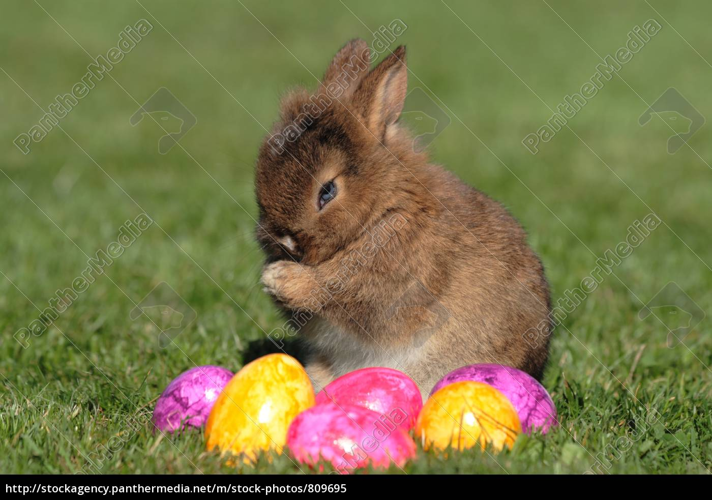 easter, bunny, cleaning - 809695