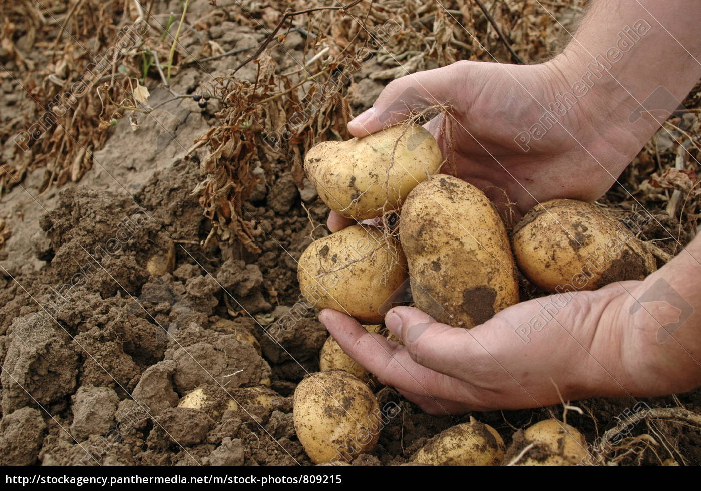 fresh, harvest - 809215