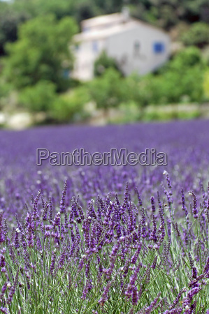 in, provence - 814185