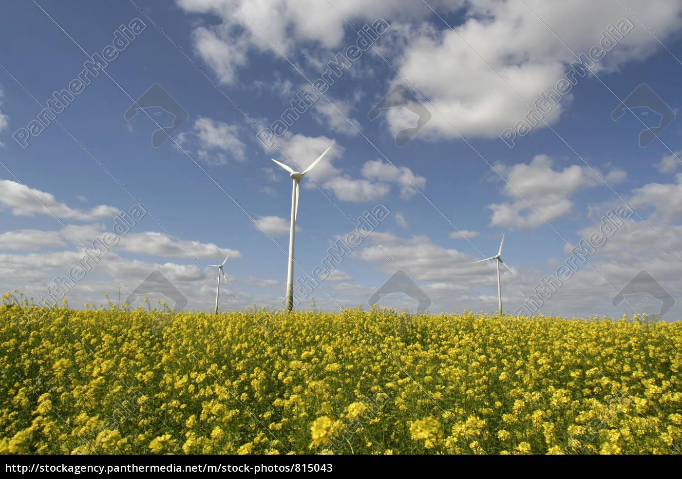 canola, field, with, wind, turbine - 815043