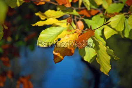 autumn, leaves - 817165