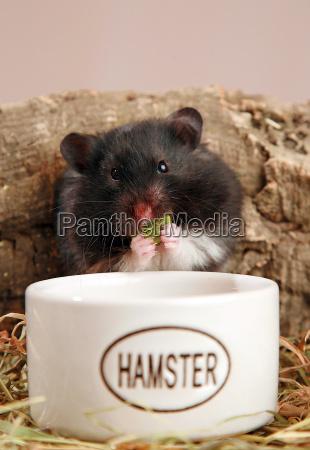panda hamster 2