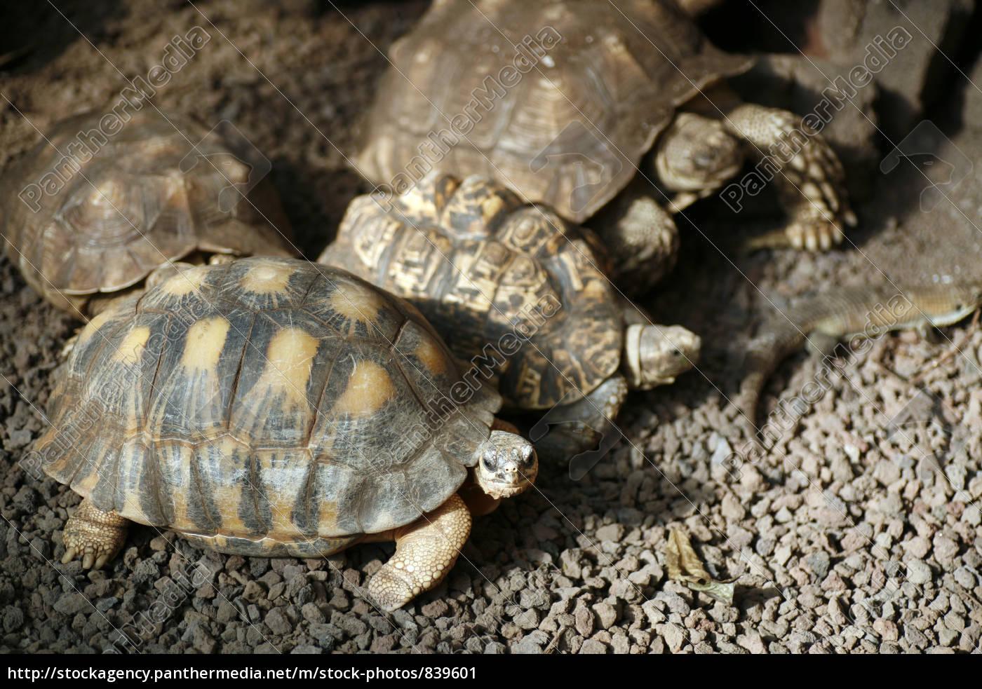 turtles - 839601