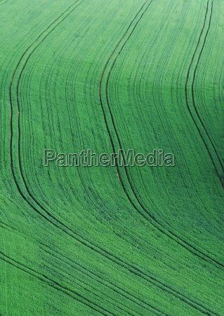 tracks in the field