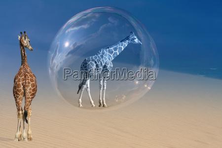 if, giraffes, dream, ... - 852173