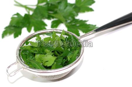 parsley - 852855