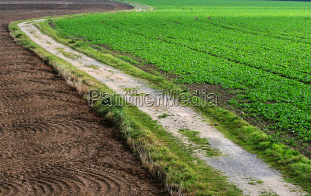 green agriculture farming dirt road field
