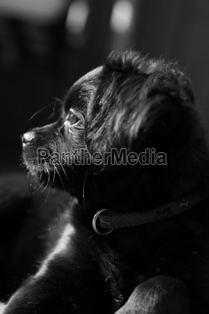 dog, thoughts - 871745