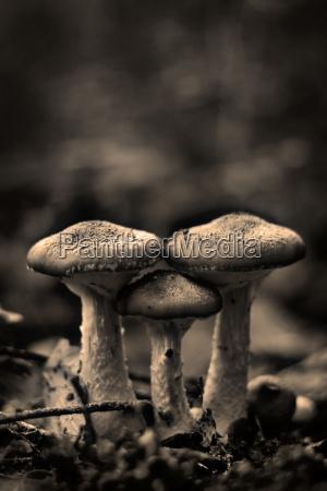 family, mushrooms - 871497