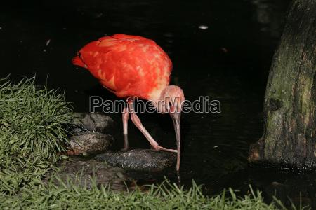 ibis - 871583