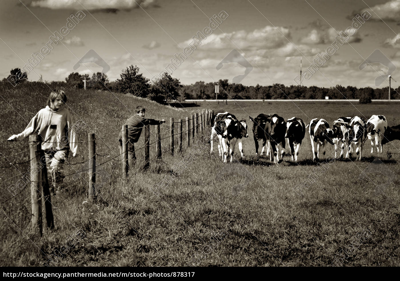 at, the, cow, pasture - 878317