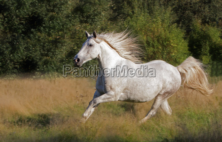 wild, horse - 890855