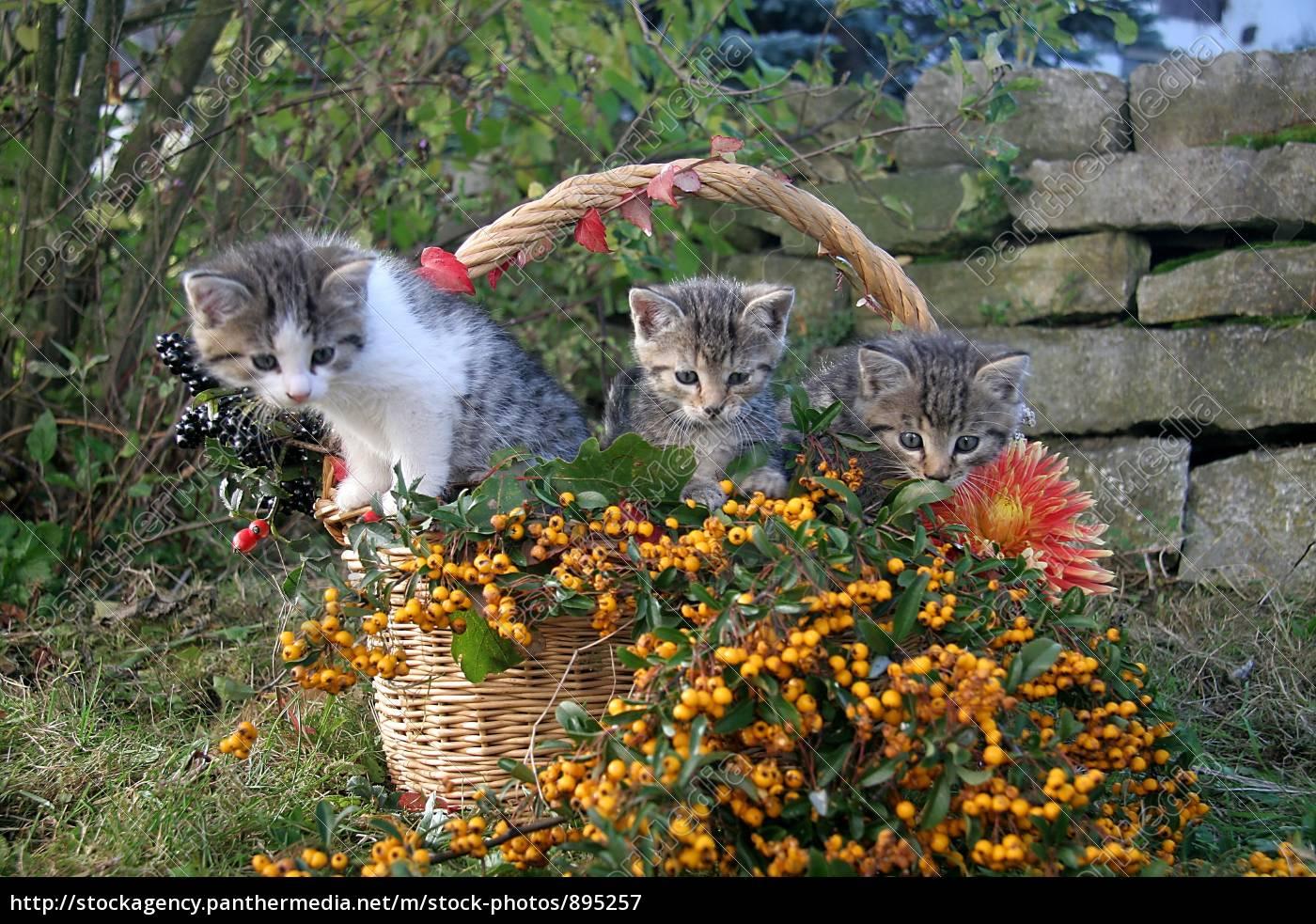 cat - 895257