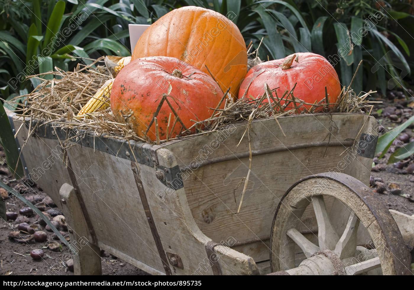 pumpkin, time - 895735