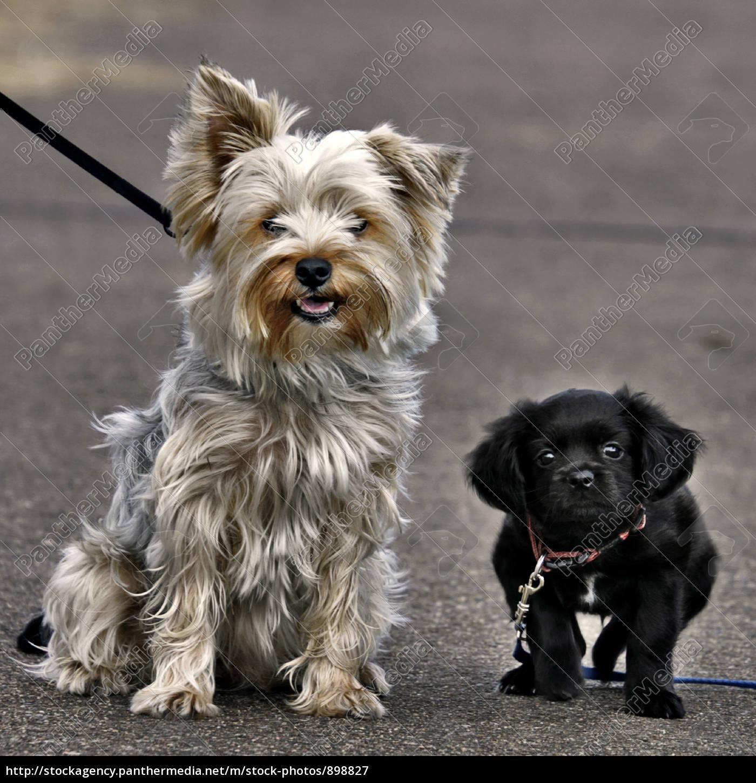 dogs, looks - 898827