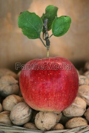 own, harvest - 899053