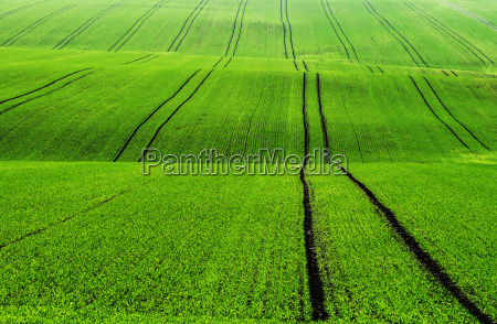 fodder hill plant green agriculture farming
