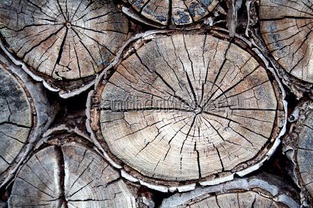 tree, eyes - 936841