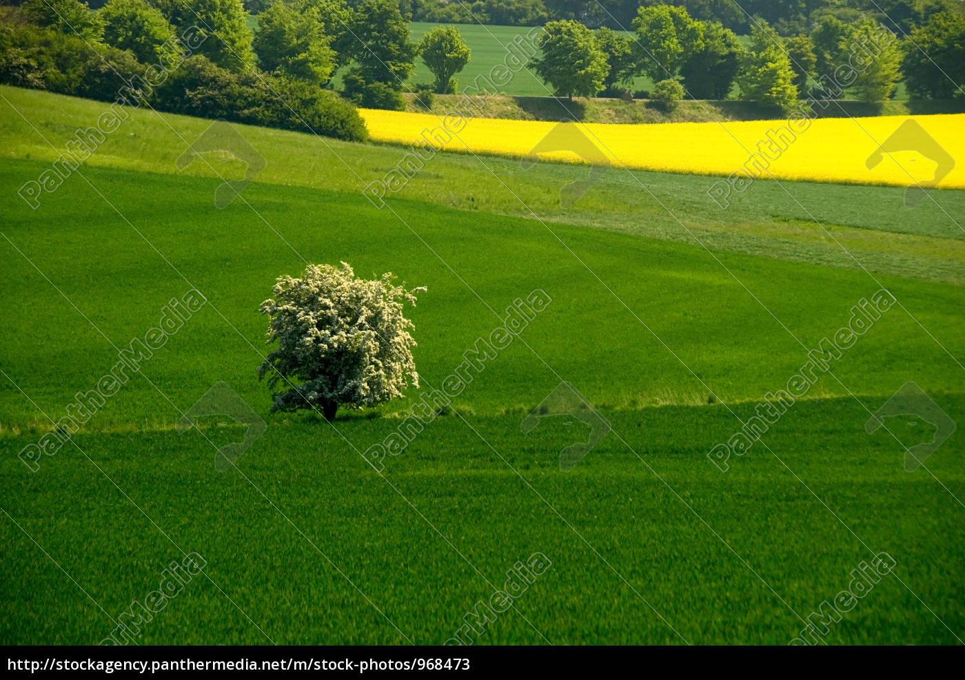 flowering, tree, in, green, field, - - 968473