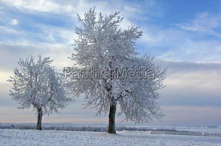 frozen duo