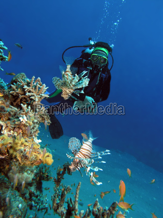 diver and lionfish