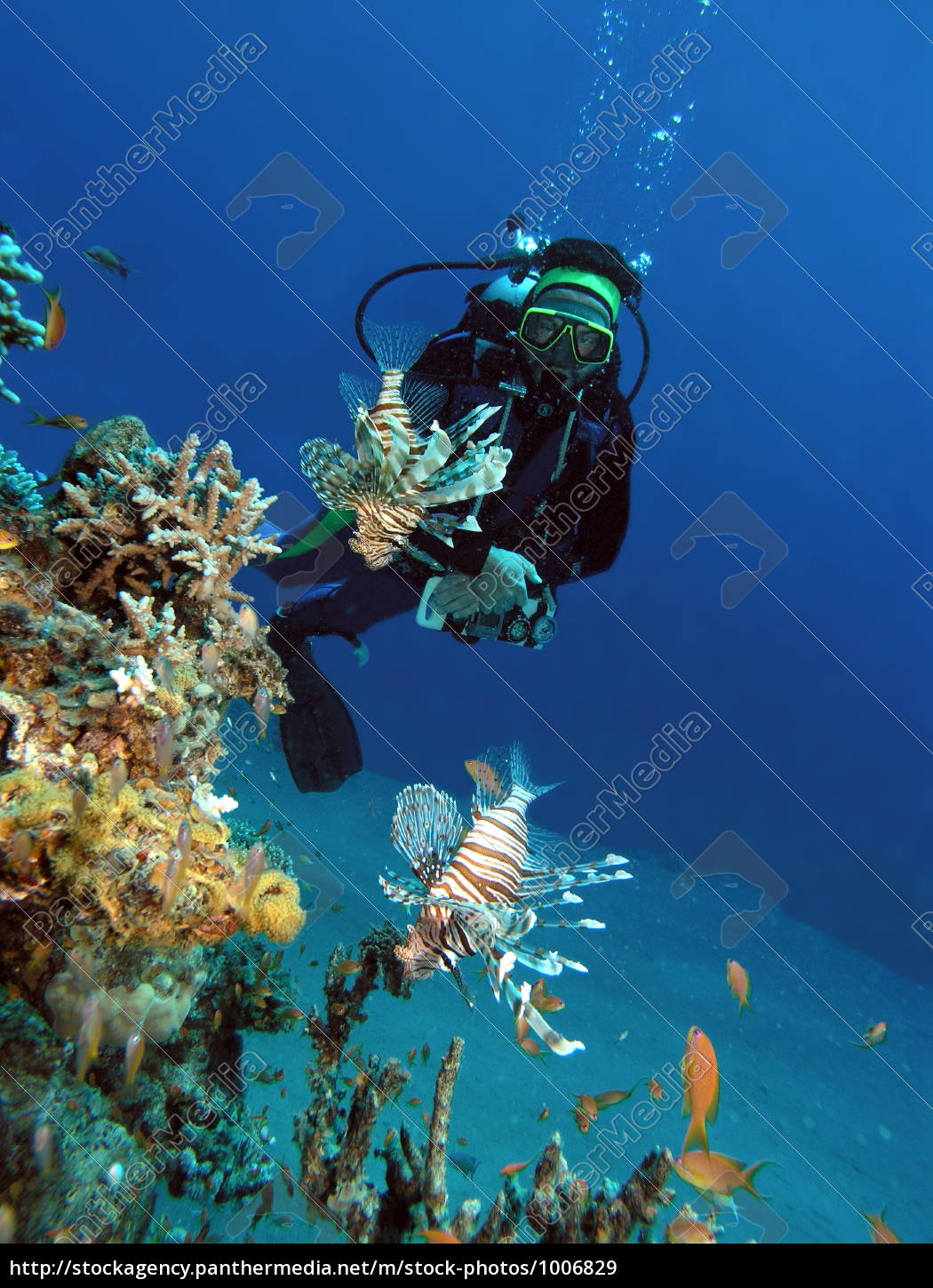 diver, and, lionfish - 1006829