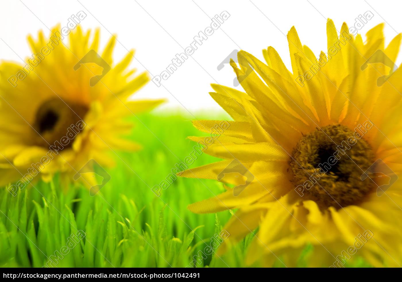 flower, meadow - 1042491