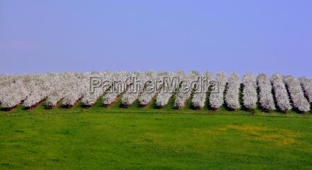 bloom blossom flourish flourishing spring may