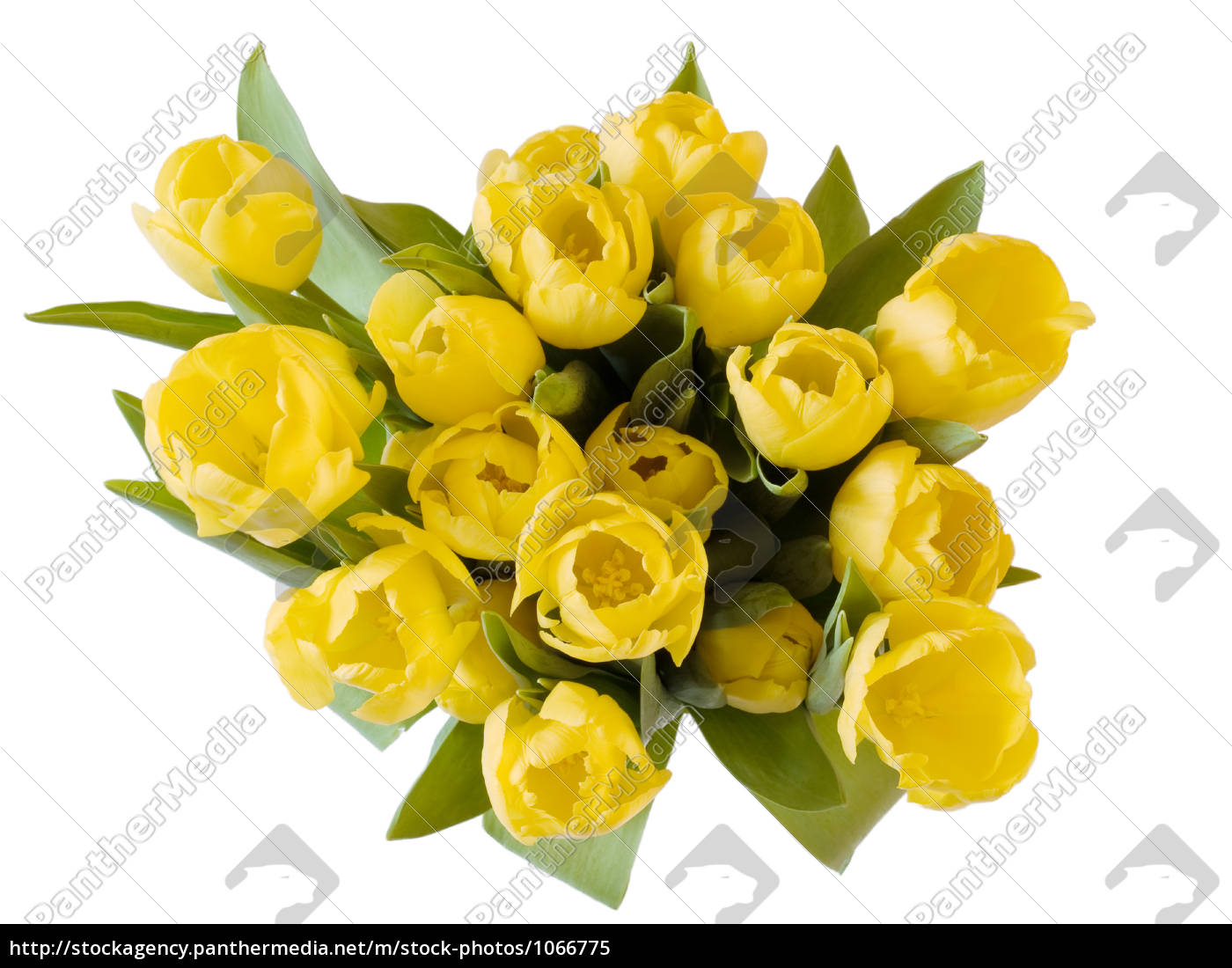 a, bunch, of, yellow, tulips, on - 1066775