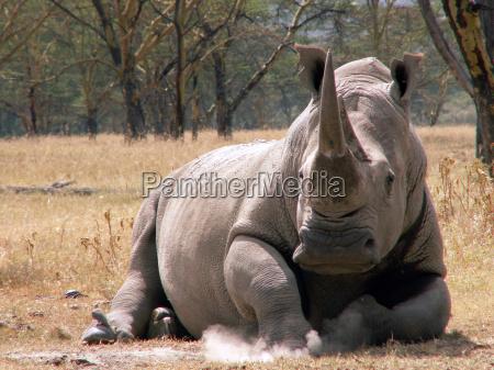 unicorn, rhino, ... - 1080545