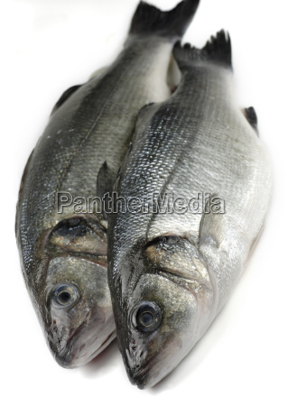 silver, angle, fish, raw, salt water, sea - 1102709