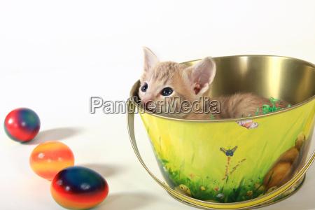 easter, kitten - 1127317