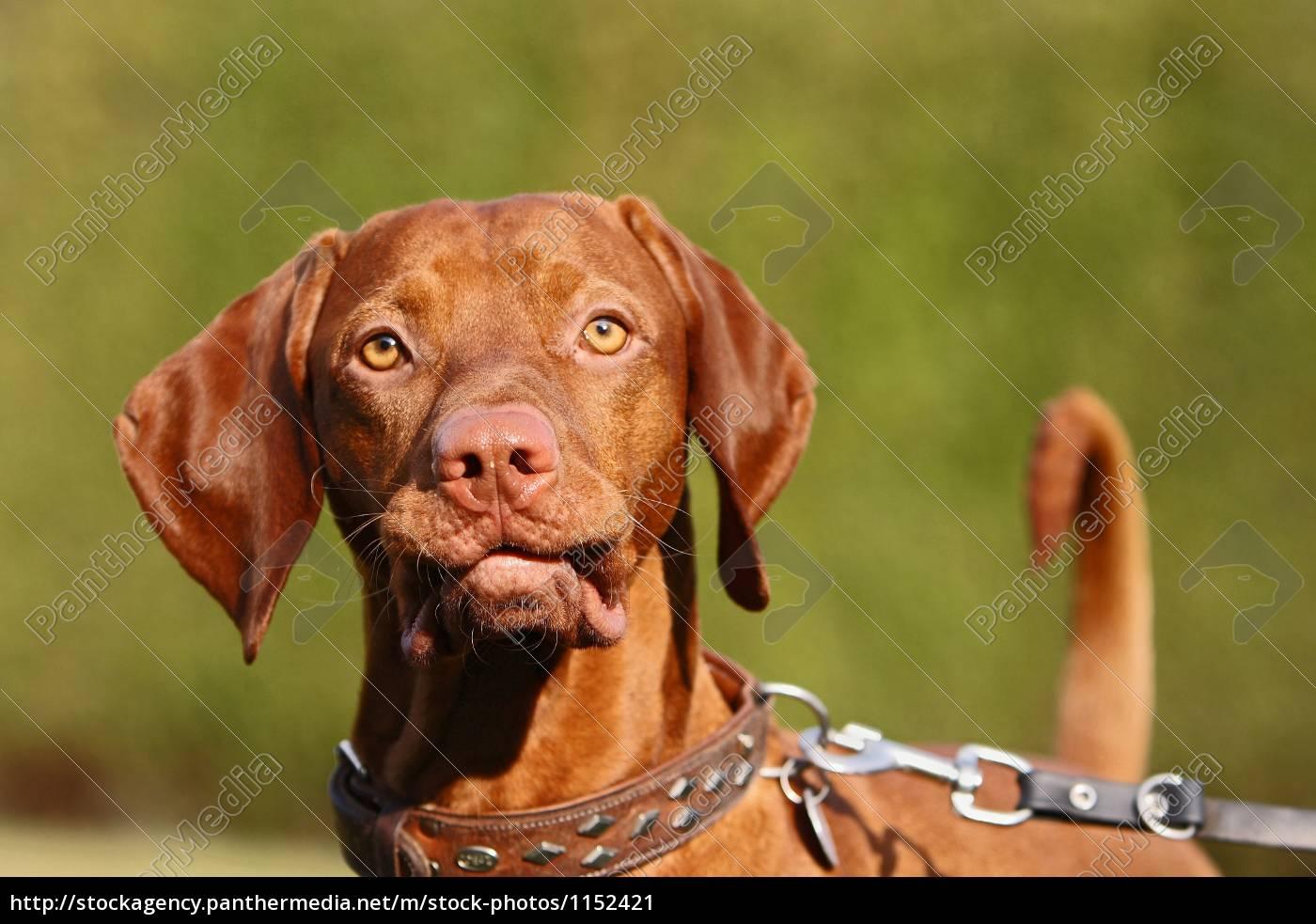on, a, leash - 1152421