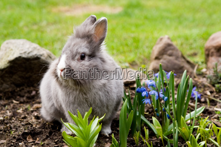 hare in the spring bed