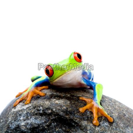 frog, on, rock - 1186673