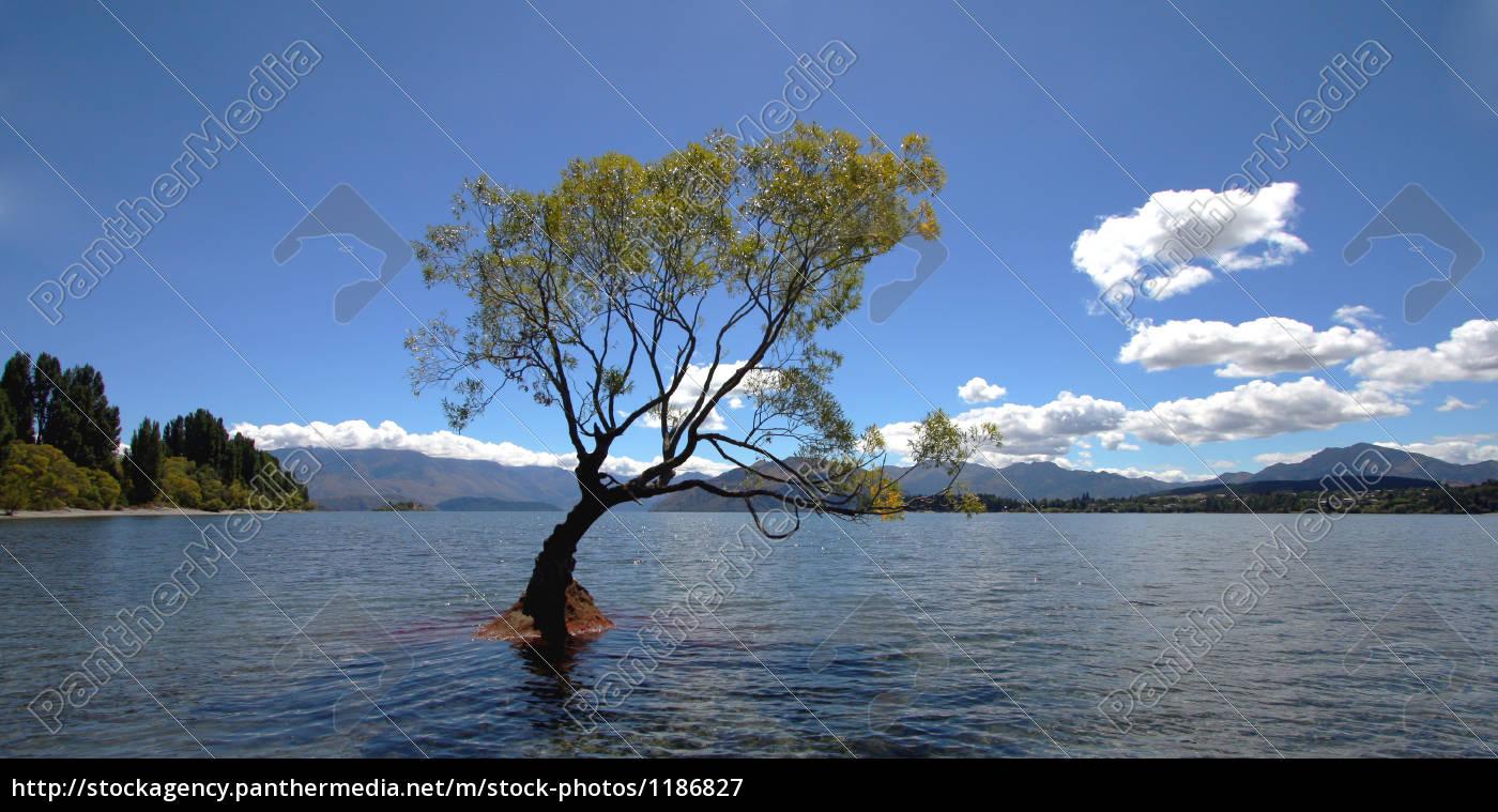 tree, in, lake, wanaka - 1186827