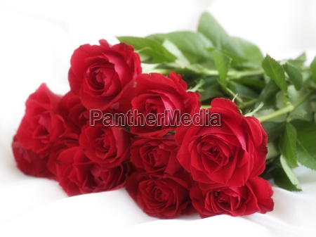 bunch, of, roses - 1220783