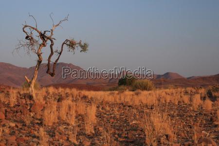 landscape in damaraland in namibia