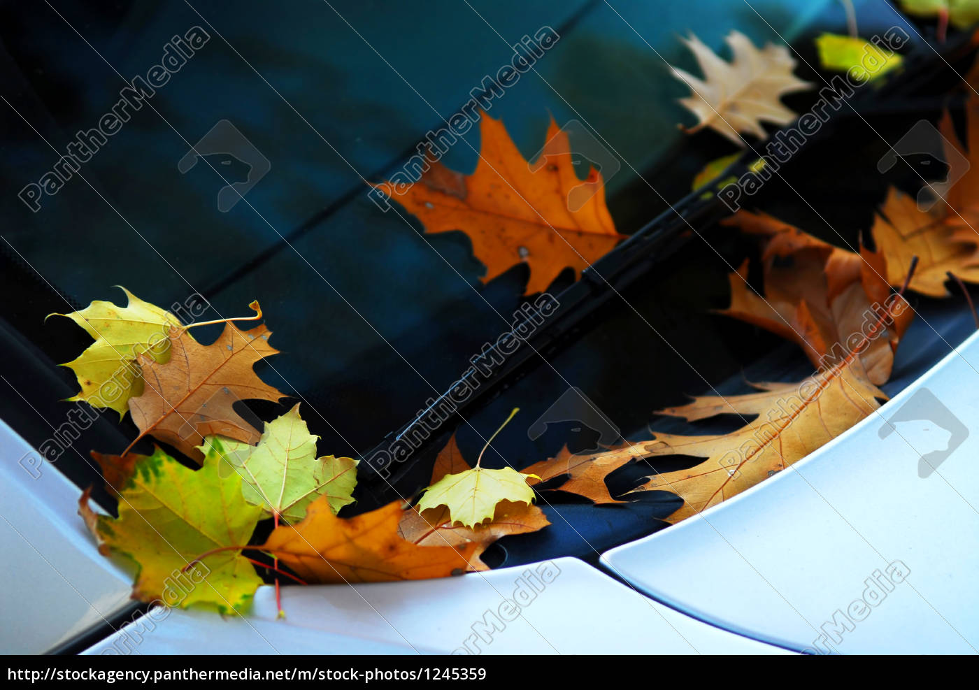 fall, leaves, on, a, car - 1245359