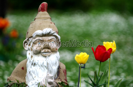 garden gnome in the allotment
